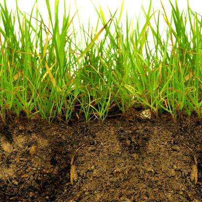Grass roots - soil analysis