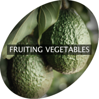 Fruiting Vegetables
