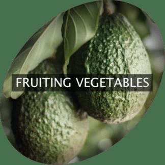 Frukt grönsaker