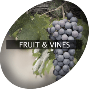 Fruit & Vines