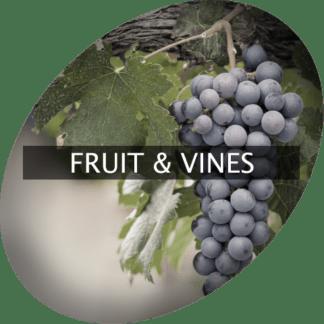 Frukt & vinstockar