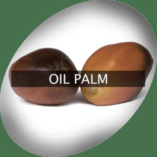 Öl Palme