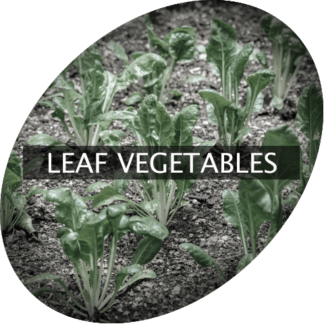 Leaf Vegetables
