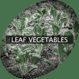 Bladgrönsaker