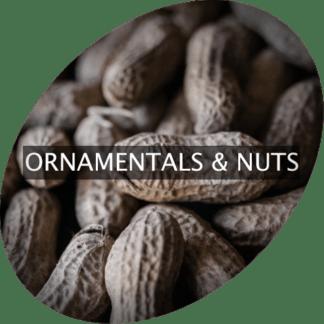 Prydnadsväxter och nötter
