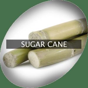 Sockerrör