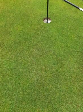 Airdrie Golf Club's golfing green