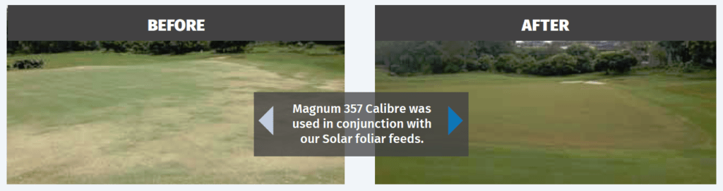 Before and after photos of turf when Magnum 357 Calibre was used in conjunction with our Solar foliar feeds