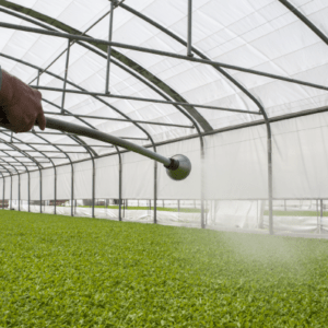 Watering Tomato Seedlings with Monsoon