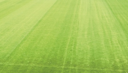 The stadium pitch at a Championship level football club after renovation, taken immediately before an application of Humik N25.
